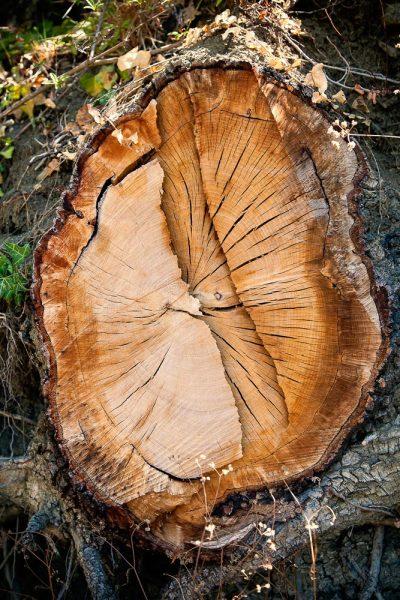 Foto di tronco di legno con texture